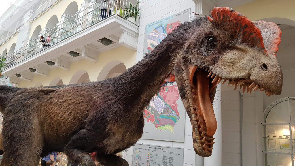 Dyzio z Muzeum Geologicznego