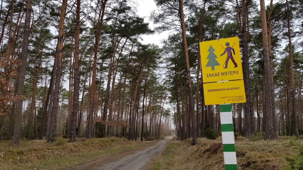 Geoart: Korona Władców Polski