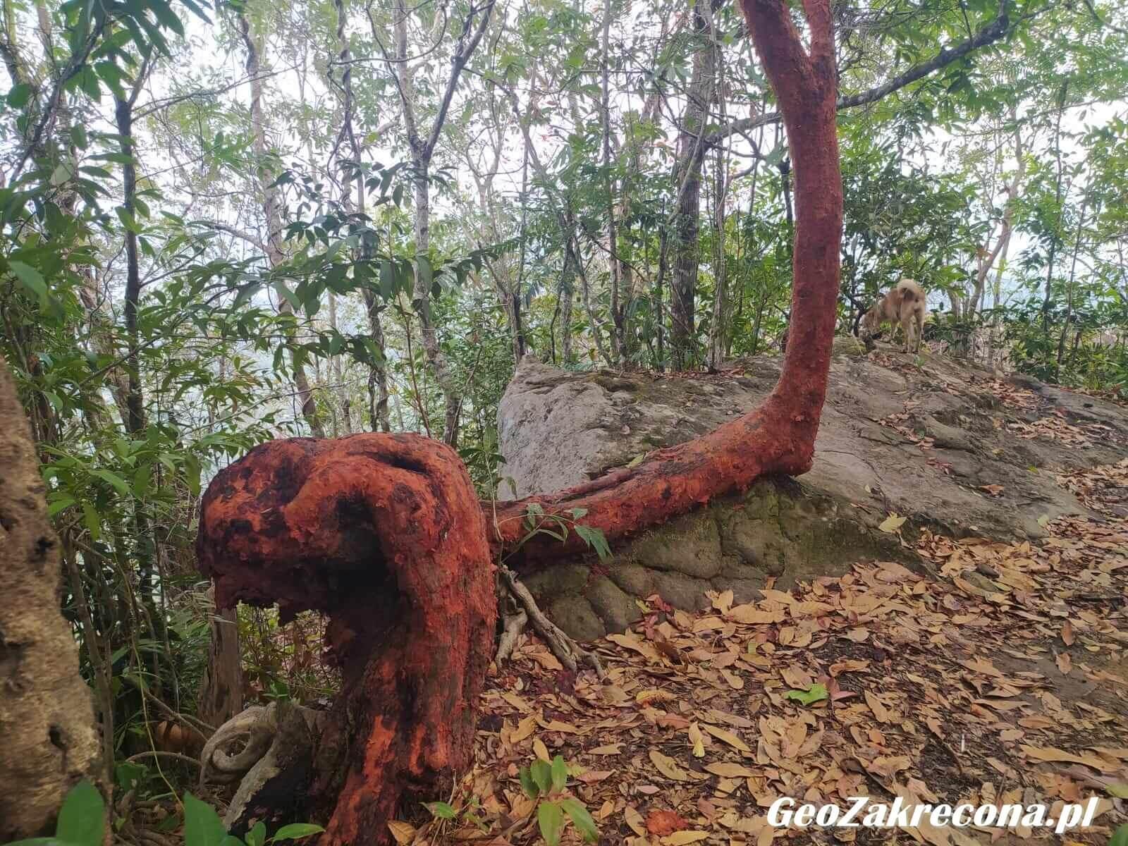 Dragon Crest Krabi